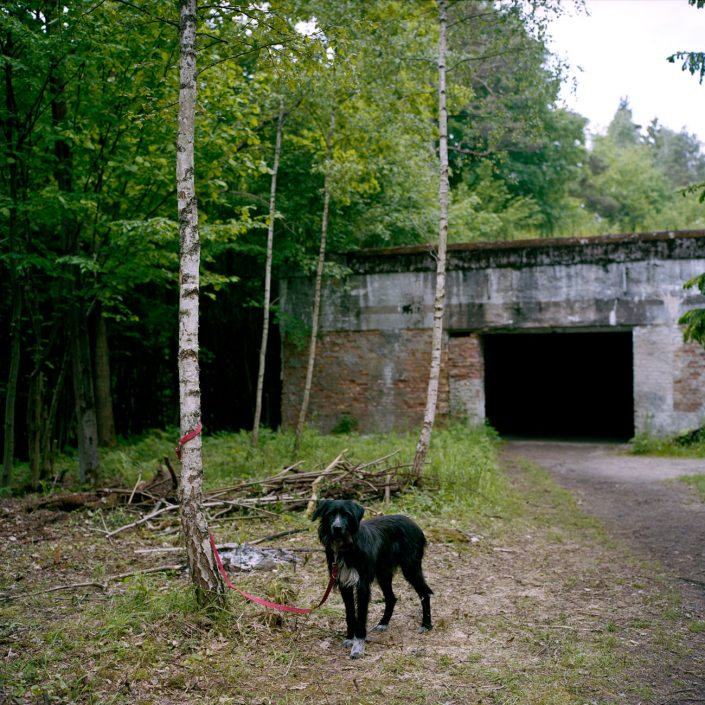 Poland, Gierloz,2011 Wolf's Lair (German: Wolfsschanze) was Adolf Hitler's first Eastern Front military headquarters in World War II.The complex, which would become one of several Führerhauptquartiere (Führer Headquarters) located in various parts of occupied Europe, was built for the start of Operation Barbarossa - the invasion of the Soviet Union - in 1941. It was constructed by Organisation Todt. De Wolfsschanze was een hoofdkwartier van Adolf Hitler tijdens de Tweede Wereldoorlog. Naast de Führerbunker bevonden zich in het complex ook gebouwen voor andere nazi-kopstukken, de lijfwachten van de Führer en eventuele gasten. De Ingang van Bunker nummer 13, de bunker van Adolf Hitler PHOTO AND COPYRIGHT ROGER CREMERS