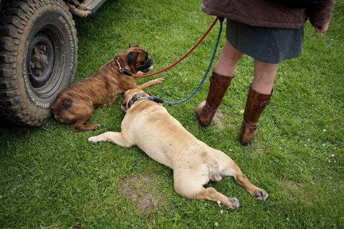 Belgie, Eben Emael, 16-05-2010 Vrouwen benen met twee honden PHOTO AND COPYRIGHT ROGER CREMER